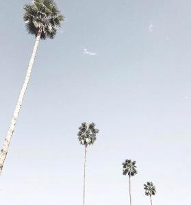 palm springs 14